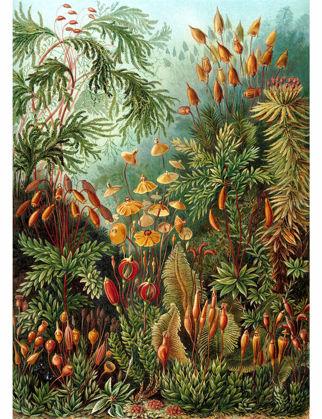 Sauca Collection Haeckel Mantar Ormanı A2 BOT027