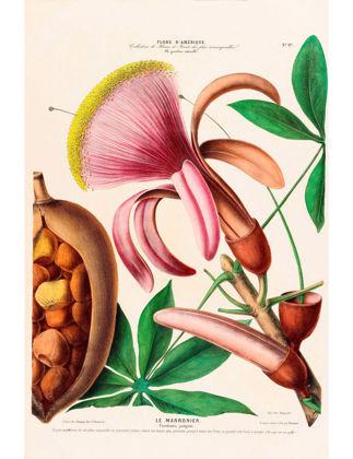 Sauca Collection Le Marronier Botanik Afişi A3 BOT139